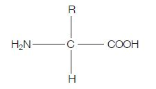 general structure of an amino acid